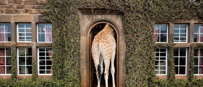 giraffe manor el hotel de las jirafas