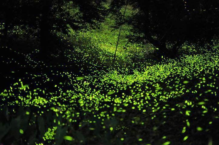 Bosque de luciérnagas en Tlaxcala
