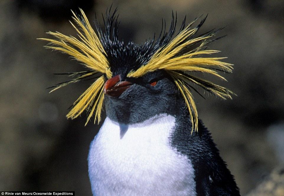 Albatros de nariz amarilla