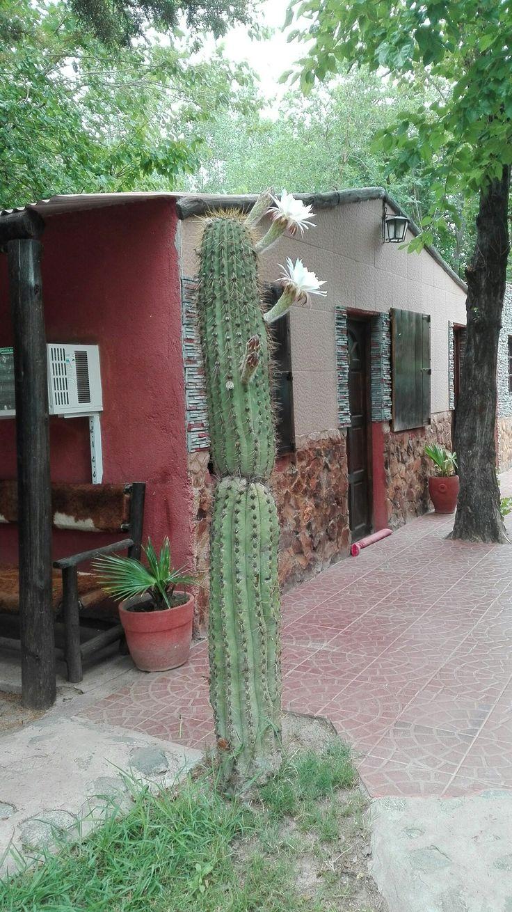 Cactus San Pedro Valle Feril
