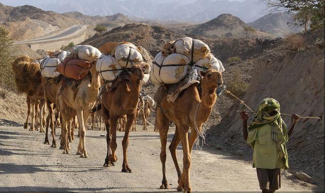 Caravana de Camellos AFAr